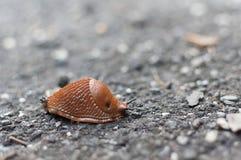 Närbild av en brun kula Royaltyfri Fotografi