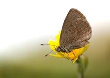 Närbild av en fjäril på en blomma Arkivfoton
