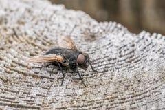 Närbild av en fluga på en trästolpe royaltyfri foto