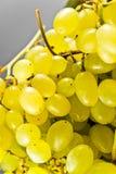 Närbild av en grupp av druvor Royaltyfri Foto