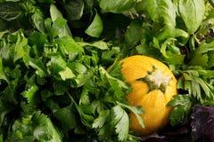 Närbild av en gul zucchini på gröna växter för en bakgrund för att laga mat Lantliga grönsaker mycket av näringsrika vitaminer royaltyfri bild