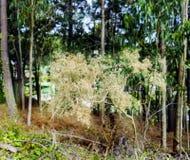 Närbild av en guling och torr hagtorn på en bakgrund av defocusen royaltyfria foton