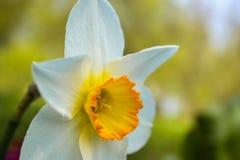 Närbild av en härlig blomma fotografering för bildbyråer