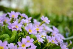 Närbild av en härlig blomma arkivfoton