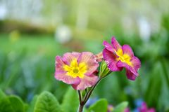 Närbild av en härlig blomma royaltyfri fotografi