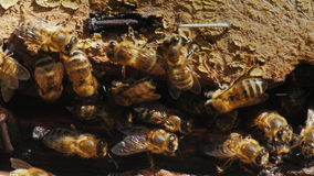 Närbild av en koloni av bin på ett gammalt trämaterial Arkivfoto
