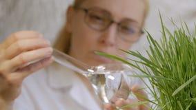 Närbild av en kvinnaforskare som ser innehållet av en exponeringsglasflaska med en klar flytande bredvid växa grönt lager videofilmer