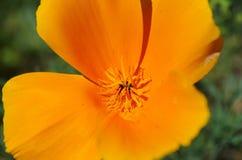 Närbild av en ljus gul blomma Arkivbild