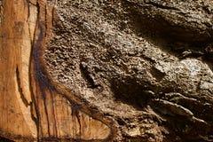 Närbild av en sågad trädstubbe arkivbild