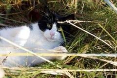 Närbild av en söt katt Arkivbilder