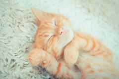 Närbild av en sova kattunge Royaltyfria Bilder