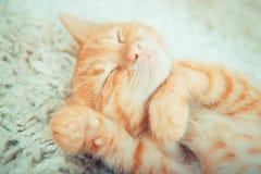 Närbild av en sova kattunge Royaltyfri Foto