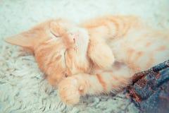 Närbild av en sova kattunge Royaltyfri Fotografi
