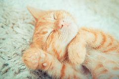 Närbild av en sova kattunge Arkivbild