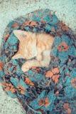 Närbild av en sova kattunge Arkivfoton