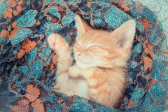 Närbild av en sova kattunge Royaltyfri Bild