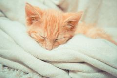 Närbild av en sova kattunge Arkivfoto