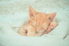 Närbild av en sova kattunge Fotografering för Bildbyråer