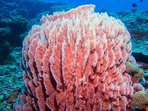 Närbild av en svamp Fotografering för Bildbyråer