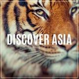 Närbild av en tigerframsida Selektivt fokusera Arkivfoto