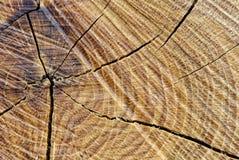 Närbild av en trägrov tabell royaltyfri bild