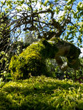 Närbild av entäckt trädfilial i solljus Royaltyfri Bild
