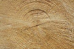 N?rbild av ett tr?dsnitt royaltyfria foton