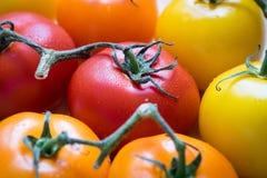 Närbild av färgglade tomater Fotografering för Bildbyråer