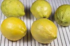Närbild av flera citroner Royaltyfri Fotografi