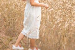 Närbild av fot som går på det guld- vetet på den soliga dagen tycka om naturen Härlig flicka i strålarna av solljus arkivfoton