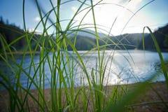 Närbild av gräs på bakgrunden av sjön i bergen Royaltyfri Fotografi