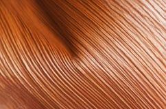 Närbild av grunden av palmbladet som visar intressant textur Royaltyfri Foto