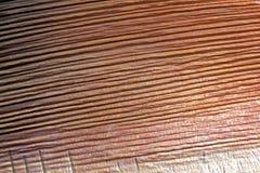 Närbild av grunden av palmbladet som visar intressant textur Royaltyfria Bilder