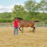 Närbild av hästen i lantgård Royaltyfri Bild