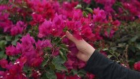 Närbild av handen för kvinna` s med härliga blommor lager videofilmer