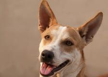 Närbild av hunden Royaltyfri Foto