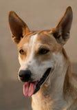 Närbild av hunden Royaltyfri Fotografi