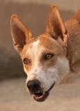 Närbild av hunden Arkivfoton