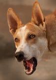 Närbild av hunden Fotografering för Bildbyråer