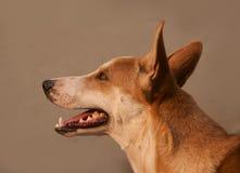 Närbild av hunden Arkivfoto
