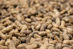 Närbild av jordnötter som torkar i sol Arkivbild