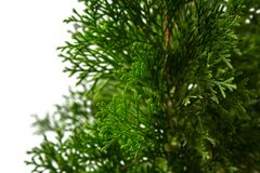 Närbild av jultreen royaltyfri foto