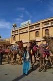Närbild av kamel Arkivfoton