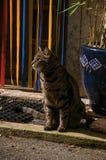 Närbild av katten framme av en dörr i ljuset av gryningen i Vence Royaltyfri Foto