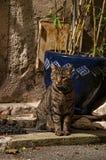 Närbild av katten framme av en dörr i ljuset av gryningen i Vence Fotografering för Bildbyråer