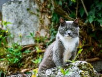 Närbild av katten som poserar på en sten som ser utmanande på kameran arkivbild