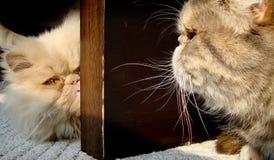 Närbild av katter Arkivfoton