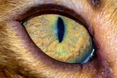 Närbild av katts öga arkivbilder