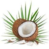 Närbild av kokosnötter på vit bakgrund Arkivfoto