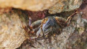 Närbild av krabban, som sitter på en sten Royaltyfri Bild